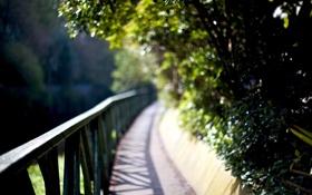 Картинка деревья, блики, листва, размытость, перила, мостик, пышная