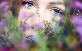 Картинка лето, девушка, цветы, настроение