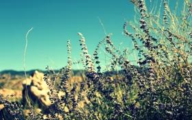 Обои зелень, фиолетовый, небо, камни, голубой, растения