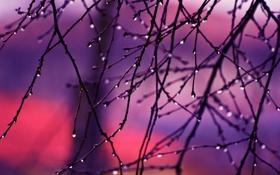 Обои капли, ветки, восход, autumn rain
