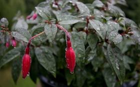 Обои зелень, цветок, капли, дождь