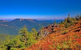 Картинка лес, осень, горизонт, небо, деревья, трава, склон