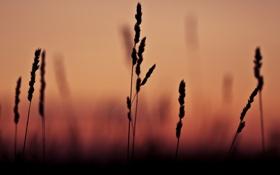 Обои трава, макро, закат, тень, фокус, grass, sunset
