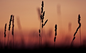 Обои закат, трава, тень, 2560x1600, grass, focus, sunset