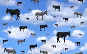 Картинка небо, фон, ослы