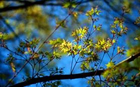 Обои солнце, цвета, листья, обои, природа, день, ветви