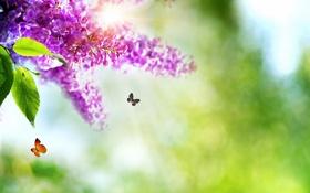 Обои природа, весна, бабочки, цветы