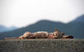 Обои кот, спит, бетон, кошка