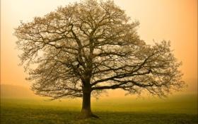 Обои природа, туман, дерево, утро, большое
