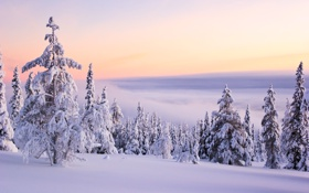 Картинка зима, небо, солнце, облака, снег, деревья, пейзаж