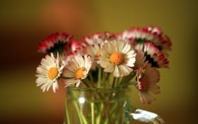 Обои цветы, фон, цвет