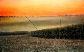 Обои поле, пейзаж, закат, стиль