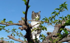 Картинка кот, глаза, сидит, Кошка, дерево, листья, небо