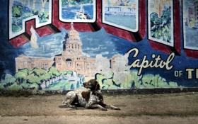 Картинка город, друг, стена, собака