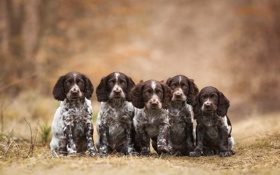 Картинка щенки, собаки, фон