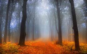 Картинка дорога, лес, деревья, туман, листва