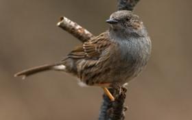 Картинка птица, ветка, воробей
