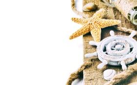 Обои бутылка, веревка, ракушки, морская звезда