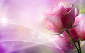 Обои цветок, роза, изгибы