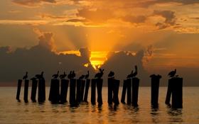Картинка море, солнце, закат, птицы, силуэты, пеликаны