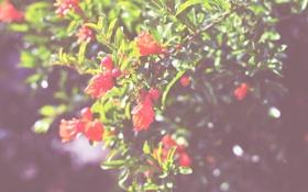 Обои зелень, цветы, дерево, куст, лепестки