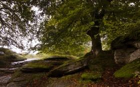Картинка зелень, осень, лес, камни, листва