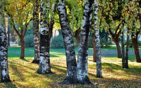 Обои стволы, листва, осень, трава, деревья