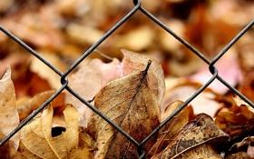 Картинка осень, листья, забор, желтые, решетка