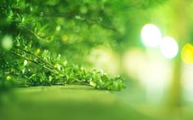 Обои зелень, листья, куст, ярко