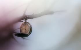 Картинка часы, ветка, циферблат