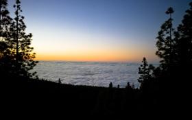 Картинка лес, облака, деревья, закат, природа, высота, ель