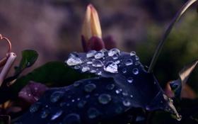 Картинка капли, макро, природа, фото, цвет, растения, листик