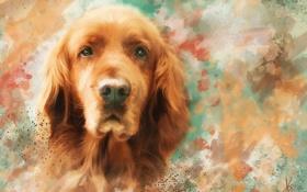 Картинка морда, рисунок, портрет, собака, картина, рыжая, живопись