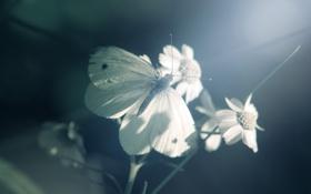 Обои свет, бабочка, Цветок