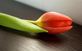 Обои цветок, листья, стол, стебли, тюльпан, лепестки