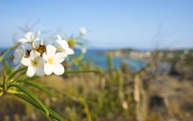 Обои лето, цветы, blur, bokeh