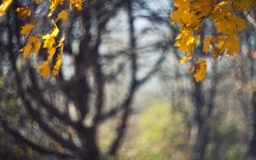 Картинка осень, листья, макро, деревья, природа