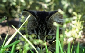 Обои пушистый, трава, котенок