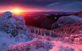 Картинка зима, лес, небо, солнце, лучи, снег, деревья