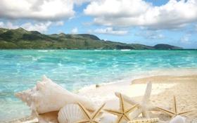 Картинка песок, море, пляж, солнце, звезды, ракушки, summer