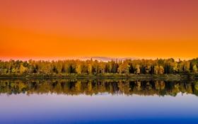 Картинка лес, деревья, закат, озеро, отражение, зеркало, оранжевое небо