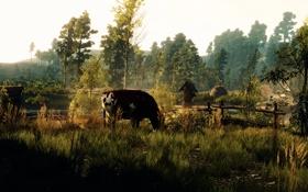 Обои деревья, корова, Ведьмак, The Witcher 3