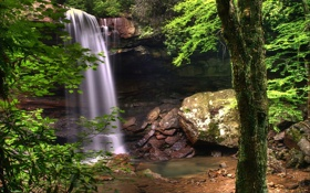 Обои зелень, вода, деревья, природа, камни, обои, растения