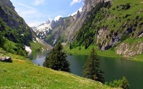 Обои деревья, горы, озеро, скалы, Швейцария, Fälensee
