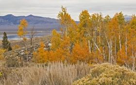 Обои осень, лес, листья, деревья, пейзаж, горы, роща