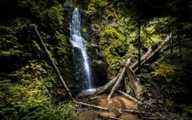 Картинка камни, скалы, поток, лес, Berry Creek Falls, деревья, водопад