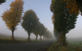 Обои дорога, деревья, природа, пути, путь, дерево, пейзажи
