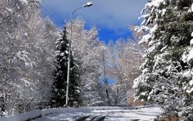 Картинка дорога, снег, пейзаж