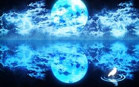 Обои Планета, птица, вода, облака