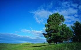 Обои трава, деревья, холмы, природа, небо, зелень, лето